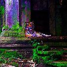 Tiger by mrfriendly