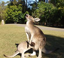 Kangaroo and Joey by Christian Byrne Cook