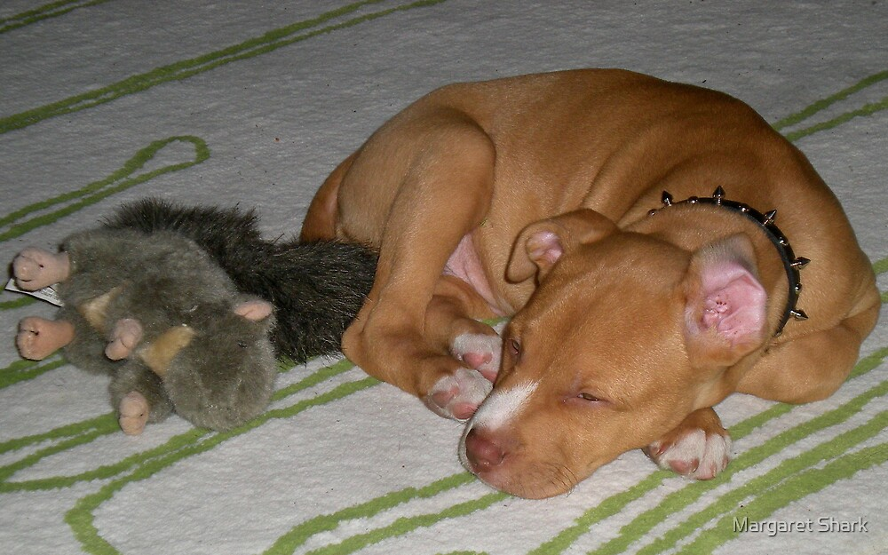 sleepy time by Margaret  Shark