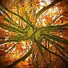 Branching Out? by John Brotheridge