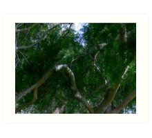 Study in Light and Shadow: Lush Foliage and Tangled Branches Art Print