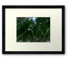 Study in Light and Shadow: Lush Foliage and Tangled Branches Framed Print