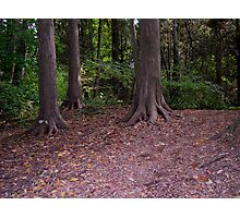 Putting down roots Photographic Print