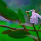 Lonely Flower by mrfriendly