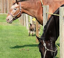 The Grass is Always Greener by Alyce Taylor