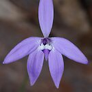 Wax Lip Orchid by Andrew Trevor-Jones