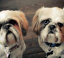 Lola & Harry by Pat Shawyer