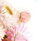 Australian Wildflowers by Penelope Thomas by Penelope Thomas