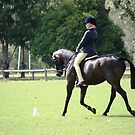 Willow Croft Black Jack NT EA HOTY Pony  by DinkaCJ