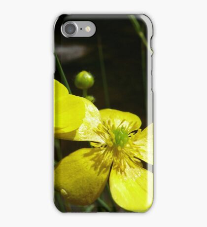 Buttercups at Pontsarn iPhone Case/Skin