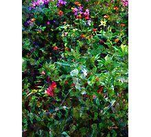 Crazyquilt Garden Photographic Print