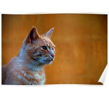 Ginger Cat Moen Denmark Poster