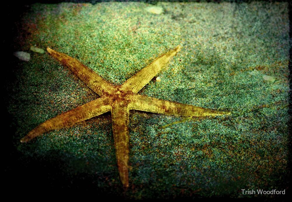 Starfish by Trish Woodford