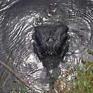 Gator by Judy Gayle Waller
