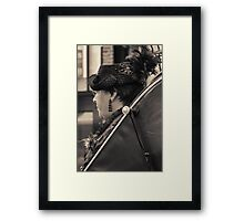 A well dressed lady Framed Print