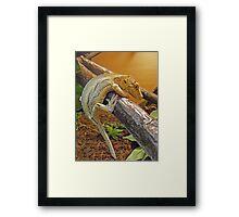 Gargoyle gecko Framed Print