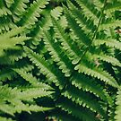 Fern  by Bethany Helzer