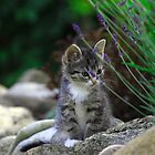 Kitten on the rocks by tamanna