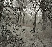 Silverburn, Fife by Julie McBrien