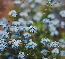 Forget-Me-Not by Bethany Helzer