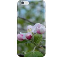 Wellwood's Spring Apple Blossoms - 3 iPhone Case/Skin