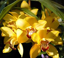 Yellow Orchid Flower by Charuhas  Images