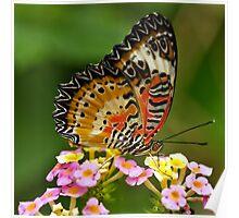 Lacewing (Cethosia biblis) Poster