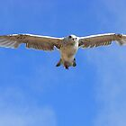 In Flight by saleire