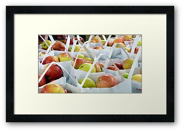 Apples Harvest by Adria Bryant
