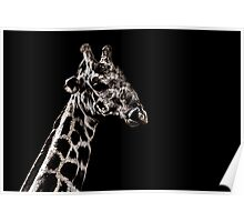Giraffe Portrait Fine Art Print Poster