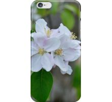 Wellwood's Spring Apple Blossoms - 5 iPhone Case/Skin