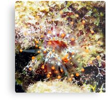 Orange Club Tipped Sea Anemone Metal Print