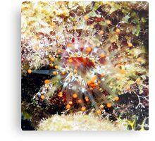 Orange Club Tipped Sea Anemone Metal Print