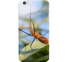 Milkweed Assassin Bug iPhone Case/Skin