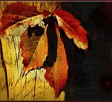 fall leaves by mountain4pam