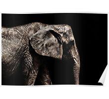 Elephant Portrait Fine Art Print Poster