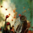 Dried plants in a pot... by Michel Raj