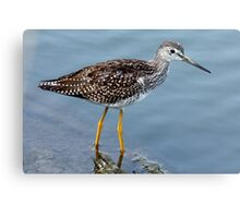 Greater Yellowlegs Profile Canvas Print