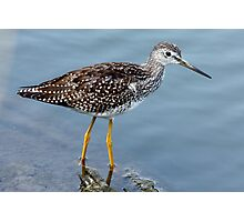 Greater Yellowlegs Profile Photographic Print