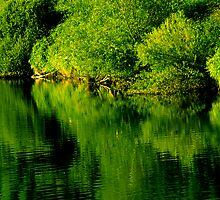 Reflections by John Passmore