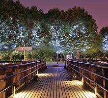 Magic Trees  by Alessandro Pinto