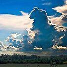 Wild Sky by Pat Moore
