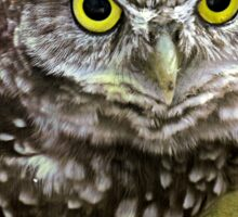 The Burrowing Owl  Sticker