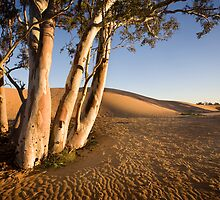 Perry Sand Hills by Lynn and Lee Deamer