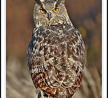 Eagle Owl HDR by quebe150