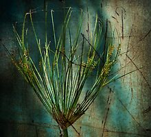 Queen Anne's Lace by Linda Gregory
