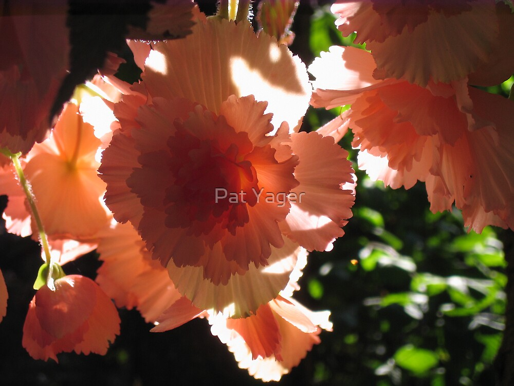 Shining in the Sun by Pat Yager