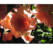 Shining in the Sun Photographic Print
