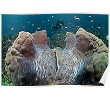 Giant Clam and Diver Poster