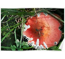 Nibbled Rosy Russula Poster